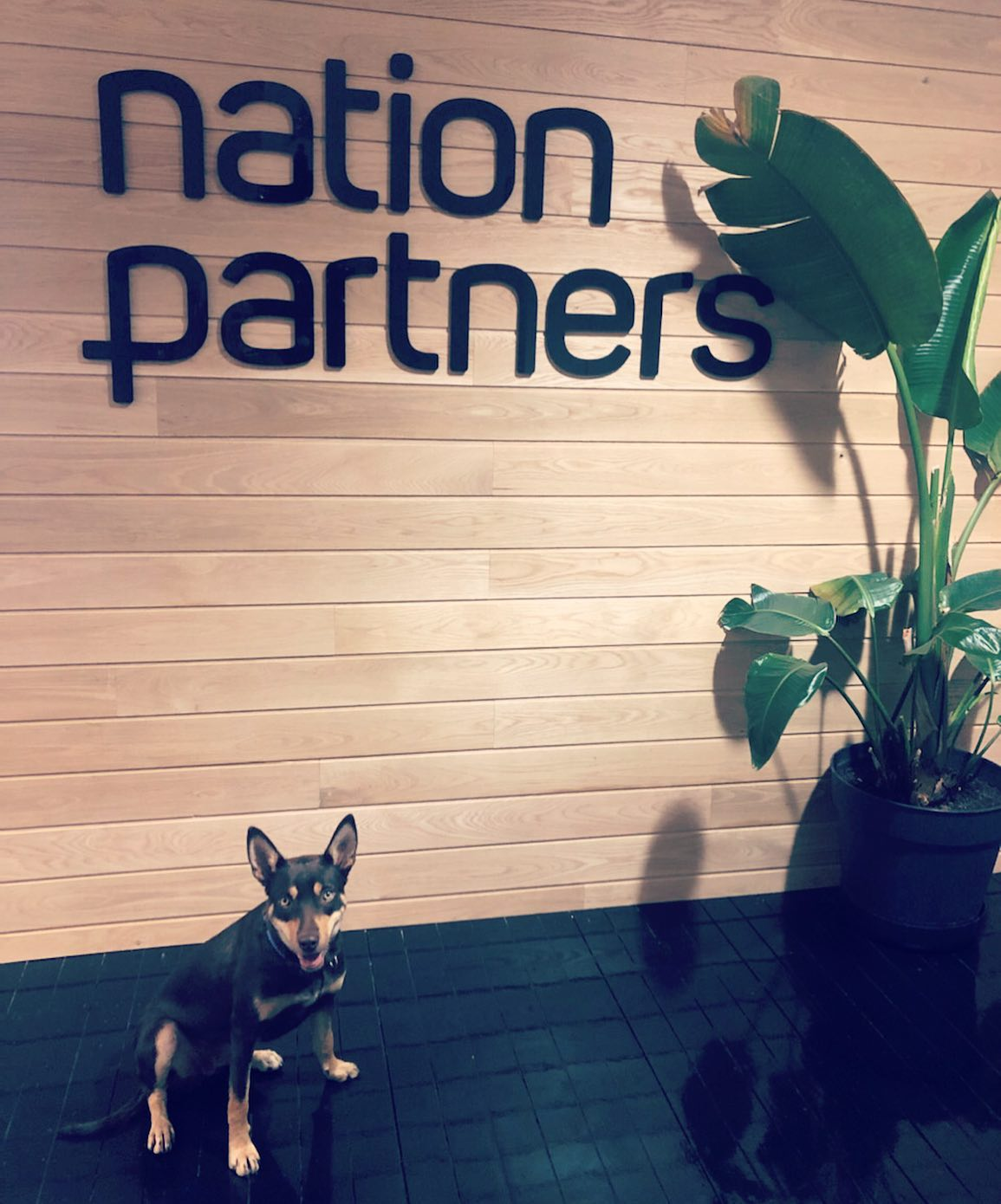 What a paw-fect way to kick start 2020, with four-legged buddy Bailey joining us in the office this week!!
